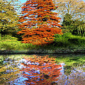 Autumn Reflections by Neil Finnemore
