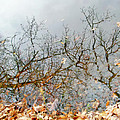 Autumn Reflections On Alloway Lake Nj by Mother Nature