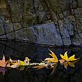 Autumn Reflections  by Saija  Lehtonen