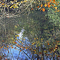 Autumn Reflections by Tony Murtagh