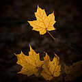 Autumn Remnant by Bill Pevlor