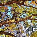 Autumn Revealed by Matthew Seufer