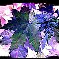 Autumn Reverie by Will Borden