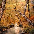 Autumn Riches 1 by Jai Johnson