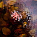 Autumn Ripples by Mike Reid