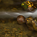 Autumn River by Mircea Costina Photography