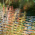 Autumn River Water Reflections  by Neal Eslinger