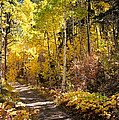 Autumn Road - Tipton Canyon - Casper Mountain - Casper Wyoming by Diane Mintle