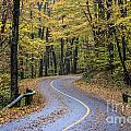 Autumn Road by John Greim