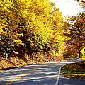 Autumn Road by Mary Koval