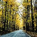 Autumn Road by Michelle Calkins