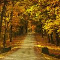 Autumn Road by Mick Burkey