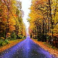 Autumn Road by Phillip Woolf