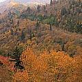 Autumn Roads by Dan Sproul