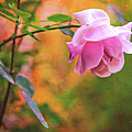 Autumn Rose by Theresa Tahara