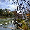 Autumn Scene Of Along The Shore Of The Platte River In Michigan by Randall Nyhof