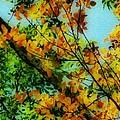 Autumn Scenery by Jeff Breiman