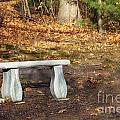 Autumn Seat by Diane Macdonald