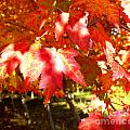 Autumn Shadows by Tisha Clinkenbeard