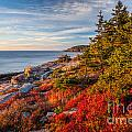 Autumn Shore In Acadia by Susan Cole Kelly
