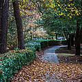 Autumn Side Walk by Dale Powell