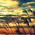 Autumn Skies Over The Ocean by Constance Carlsen