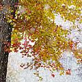 Autumn Snow by Stephanie McDowell