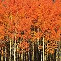 Autumn Splender  by Sean  Jungo