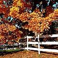 Autumn Splendor 10 by Will Borden