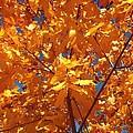 Autumn Splendor 15 by Will Borden