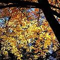 Autumn Splendor 3 by Will Borden