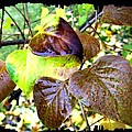 Autumn Splendor 4 by Will Borden