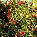 Autumn Splendor 5 by Will Borden