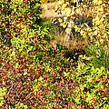 Autumn Splendor 7 by Will Borden