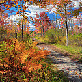 Autumn Splendor by Bill Wakeley