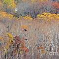 Autumn Splendor by Cindy Manero