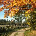 Autumn Splendor by Jim  Wallace