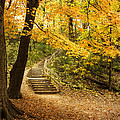 Autumn Stairs by Scott Norris