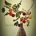 Autumn Stillife by Heike Hultsch