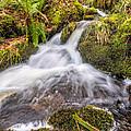 Autumn Stream by Adrian Evans