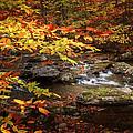 Autumn Stream by Bill Wakeley