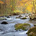 Autumn Stream by Judy Kennamer
