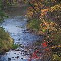Autumn Stream by Michele Steffey