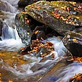 Autumn Stream North Georgia by Bruce Gourley