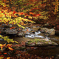 Autumn Stream Square by Bill Wakeley