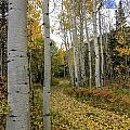 Autumn Stroll by Bill Sherrell