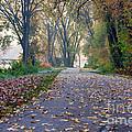 Autumn Stroll II by Kari Yearous