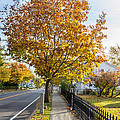 Autumn Stroll In Mystic by Kirkodd Photography Of New England