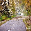 Autumn Stroll by Kari Yearous