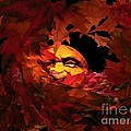 Autumn Sun by Micki Findlay